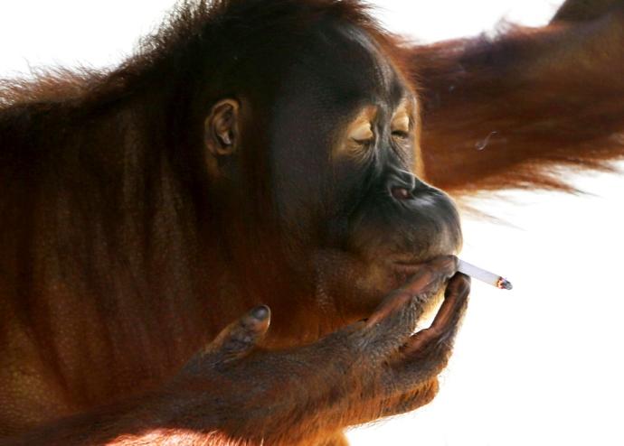 fumatul dauneaza...