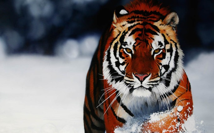 animals-hd-wallpapers-part