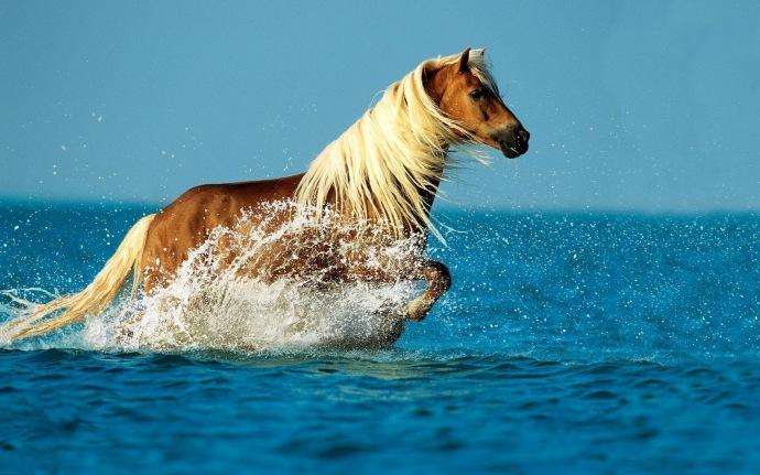 hd-paarden-achtergrond-met-een-paard-in-de-zee-hd-paard-wallpaper