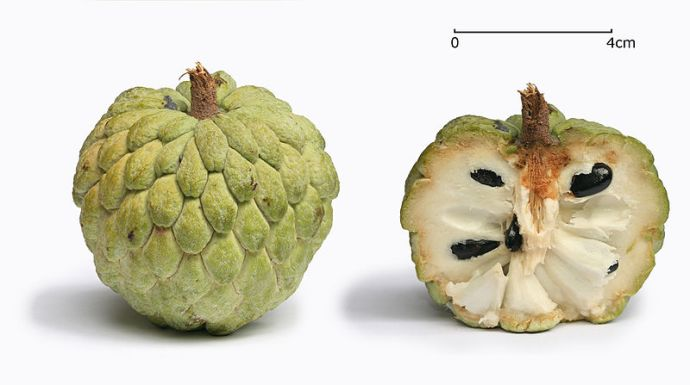 Sugar_apple_with_cross_section